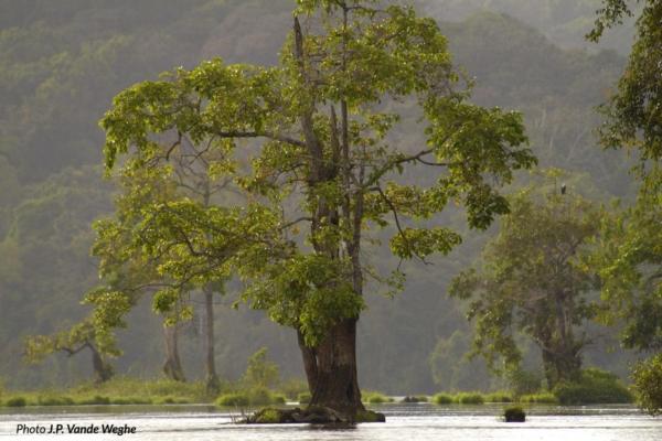 Uno dei tanti alberi sul fiume Ivindo