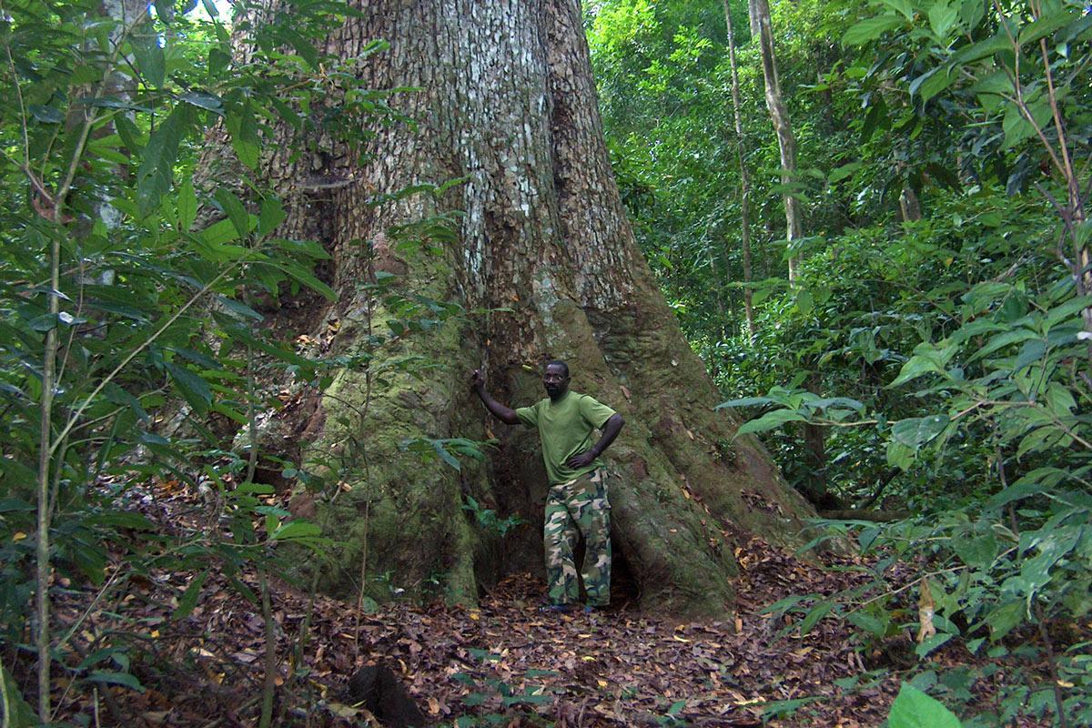 Guida appoggiata su un grande albero