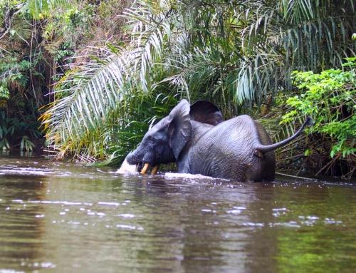 Elefante in riva al fiume
