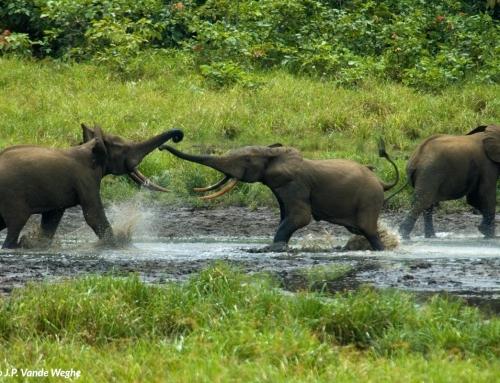 Elefanti sulla riva del fiume