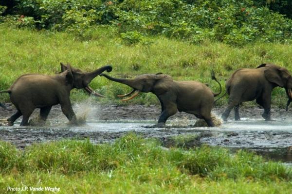 Gruppo di elefanti che si lavano nel fiume
