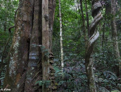 La Foresta del Parco Nazionale dell'Ivindo