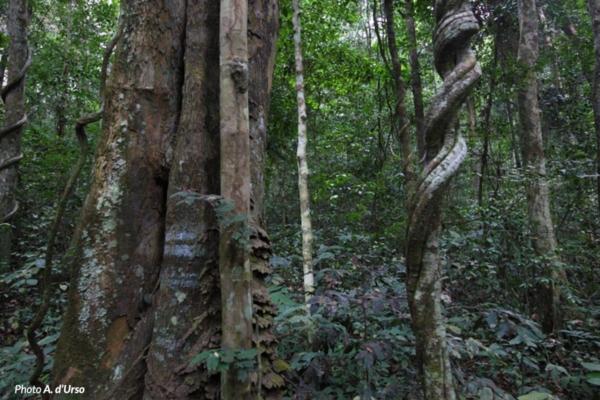 Un dettaglio della foresta dell'Ivindo