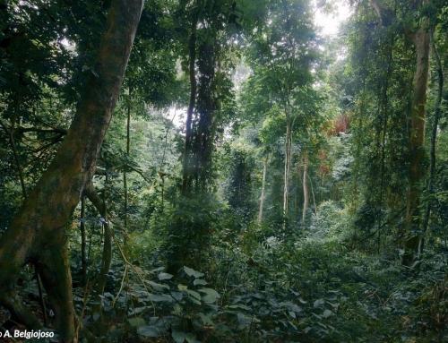 La foresta, foto dettaglio di percorso