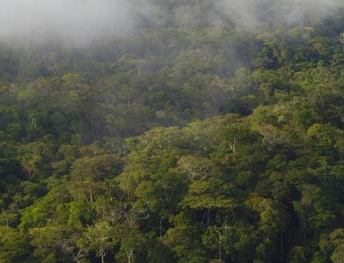 La foresta sottostante il Monte Kingue