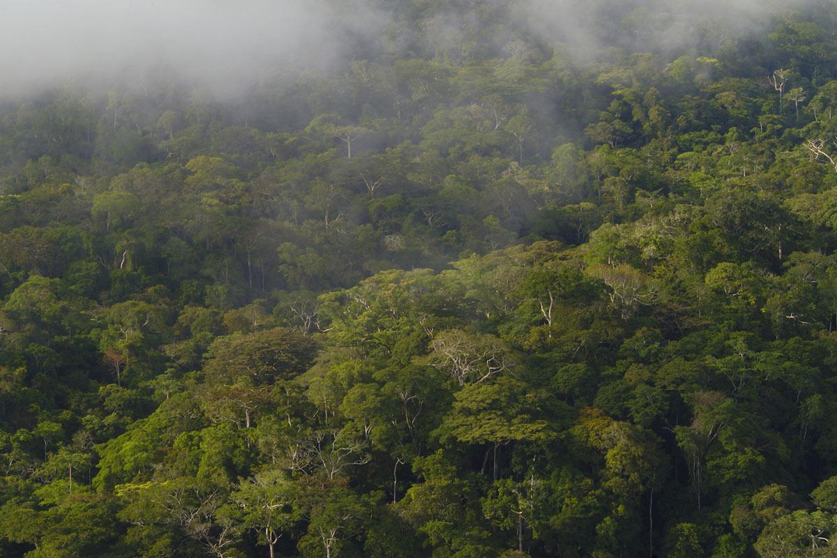 La foresta vista dall'alto del Monte Kingue