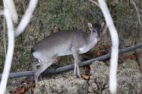 Animale che gira per la foresta e si accorge di noi