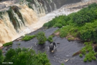 Elefante al pendio delle cascate Kongou
