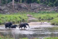 Famiglia di elefanti con il piccolo elefantino
