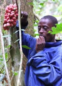 Guida mangia un frutto della foresta