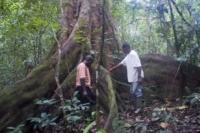 Guide che osservano le radici dell'albero