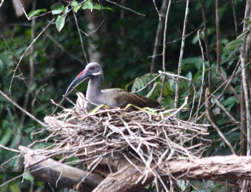 Uccello nel nido