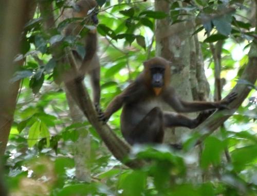 Scimmia sopra l'albero