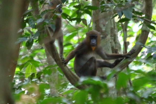 Una scimmi che ci osserva da un albero