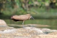 Uccello sopra una roccia vicino al fiume