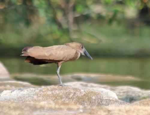 Uccello sul fiume