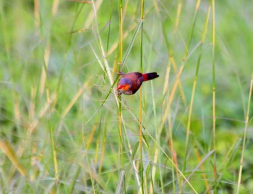 Uccellino nell'erba
