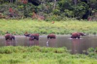 Gruppo di elefanti nel fiume