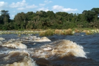 Piante nel fiume